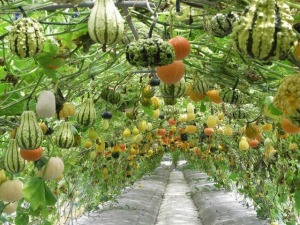 5-Stunning-Vertical-Vegetable-Gardening-Ideas