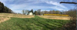 Forsythia Farm Photo(1)